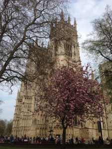 York Minster, with added blossom