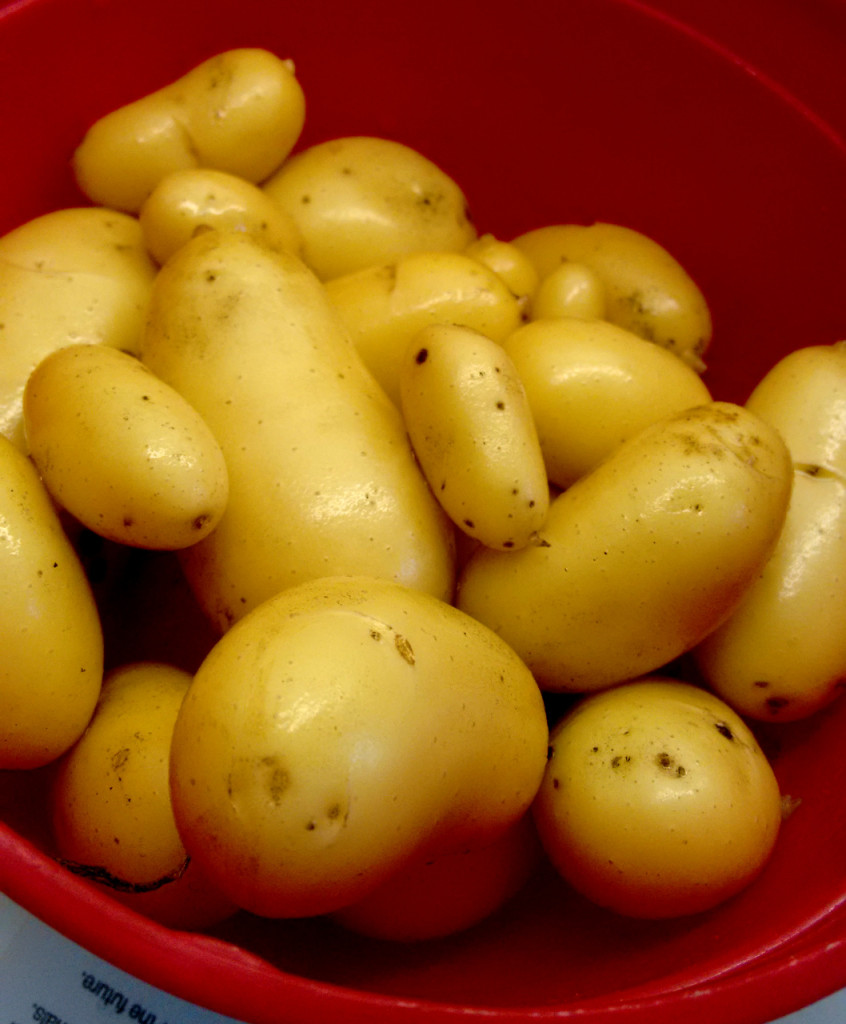 spuds_in_july